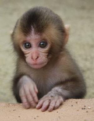 猿の画像 p1_35