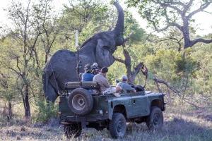 ニコニコからがおーっ!新番組「アフリカ・サバンナ野生動物ツアー生中継」2/1より放送開始