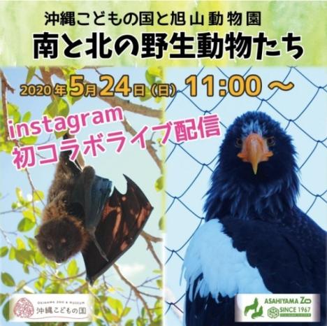 北海道「旭山動物園」と「沖縄こどもの国」の動物園が、共同でライブ配信実施